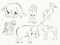 Wild Animals. Set of Wild Animals - Pelican, Antelope, Mouflon, Rhinoceros, Elephant, Tiger Royalty Free Stock Image
