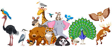 Wild animals standing in group Stock Photo