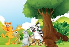Wild animals standing under the tree Royalty Free Stock Photos