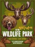 Wild animals vector zoo sketch wildlife poster Royalty Free Stock Image
