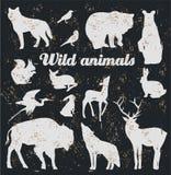 Wild animals Royalty Free Stock Photography