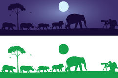 Wild Animals Wall Decal Stock Images