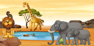 Wild animals by the waterhole. Illustration Royalty Free Stock Photography