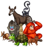 Wild animals on white background Stock Images