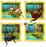 Wild animals in wooden frame Royalty Free Stock Photo