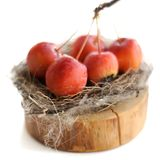 Wild apples in a bird's nest. Isolated Stock Photo