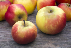 Wild apples Stock Images