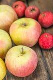 Wild apples Stock Photos