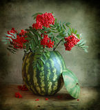 Wild ash and water-melon Stock Images