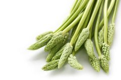 Wild asparagus Stock Photos