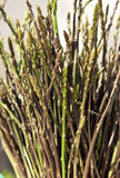 Wild asparagus Royalty Free Stock Images