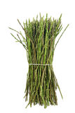 Wild asparagus Royalty Free Stock Photo