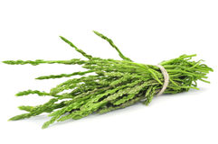 Wild asparagus Royalty Free Stock Photos