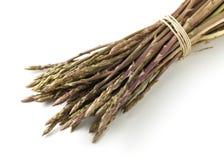 Wild asparagus spears Stock Photography