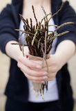 Wild asparagus spears Royalty Free Stock Images