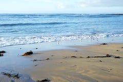 Wild atlantic way birds on the beach Royalty Free Stock Images