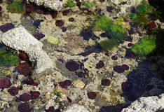 Wild Atlantic Way  Underwater life on the coast at St Johns  Point stock images