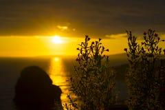 Wild Atlantic Way Sunset Flowers Royalty Free Stock Images