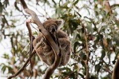 wild Australien livstid Arkivfoton
