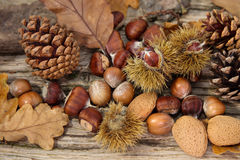 Wild Autumn background. Wild Autumn - Pine Cones, Hazel Nuts,  Almonds and Leaves on a Driftwood background Royalty Free Stock Image