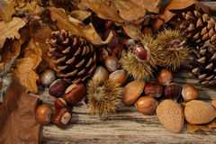 Wild Autumn background. Wild Autumn - Pine Cones, Hazel Nuts,  Almonds and Leaves on a Driftwood background Stock Image