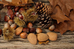 Wild Autumn background. Wild Autumn - Pine Cones, Hazel Nuts,  Almonds and Leaves on a Driftwood background Stock Photos