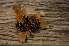Wild Autumn background. Wild Autumn - Pine Cones and Leaves on a Driftwood background Stock Photos