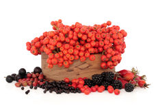 Wild Autumn Berry Fruit Royalty Free Stock Photography