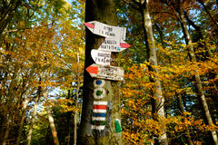 Wild autumn forest and signs Stock Photos
