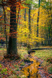 Wild autumn forest Stock Images