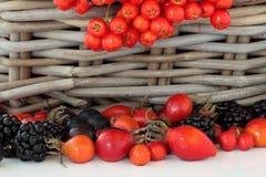 Wild Autumn Fruit Royalty Free Stock Image
