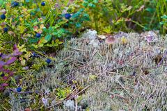 Wild autumn landscape closeup Royalty Free Stock Photography