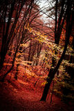 Wild. Background of forest in autumn Royalty Free Stock Photos