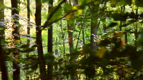 Wild Balkans forest in motion stock footage