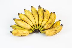 Wild banana with white background Royalty Free Stock Images