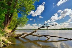 Wild bank of the river Vistula.Poland. Royalty Free Stock Photos