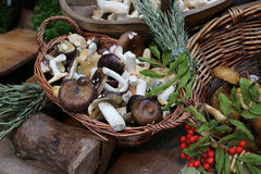 Wild Mushrooms in Basket Royalty Free Stock Photography