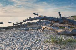 Wild beach of the Baltic Sea at dawn Royalty Free Stock Images