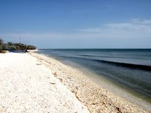 Wild beach of the Black Sea 3. Wild beach on the Black Sea. Black Sea at the mouth of the Danube into the sea royalty free stock image