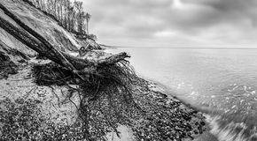 Wild beach with fallen tree and cliffs on winter, cloudy day. Waves on the sea. Royalty Free Stock Image