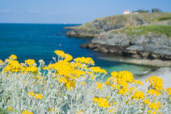 Wild beach in France. Royalty Free Stock Photo