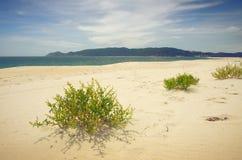 Wild Beach Royalty Free Stock Photos