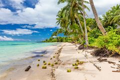 Wild beach with palm trees and coconuts on south side of Upolu, Royalty Free Stock Photos