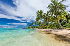 Wild beach with palm trees on south side of Upolu, Samoa Islands Stock Photos