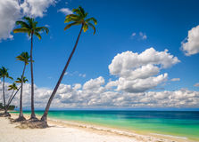 Wild beach palm trees. Wild beach with white sand and palm trees Stock Photo