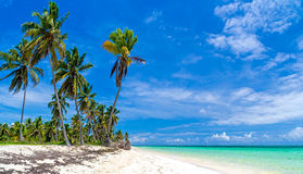 Wild beach with palm trees. Wild beach with white sand and palm trees Royalty Free Stock Photos