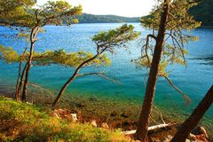 Wild beach in pine forest, Island Mljet, Croatia. Mediterranean landscape, wild beach in pine forest, Island Mljet, Croatia Stock Photos