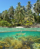 Wild beach shore with corals and fish underwater Royalty Free Stock Photography