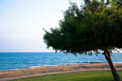 Wild beach. With tree on a side Stock Photos