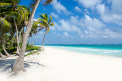Wild Beach at Tulum Stock Image